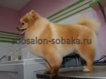 zoosalon-sobaka.ru