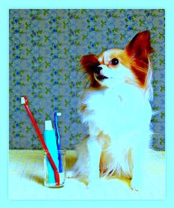 Регулярная чистка зубов собаке 2 или 3 раза в неделю