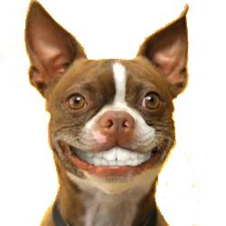 Счастливая и благодарная собачка